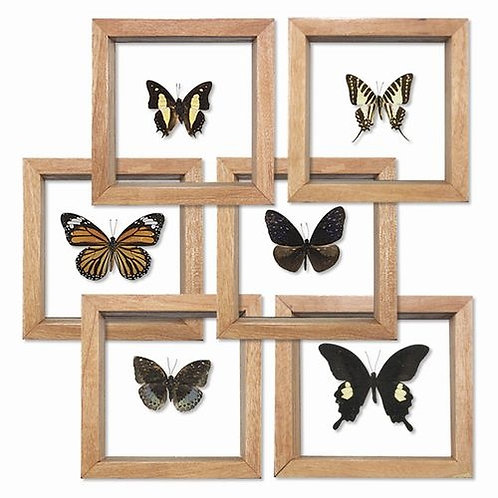 Lighthouse Point Collection- framed butterflies