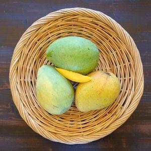 Caribbean Collection- Edward mango tree