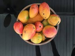 Caribbean Collection- Juliette mango tree