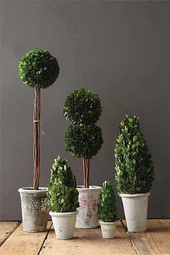 Palm Beach Collection- cone topiaries