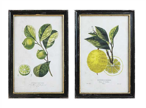 Palm Beach Collection- botanical style fruit prints