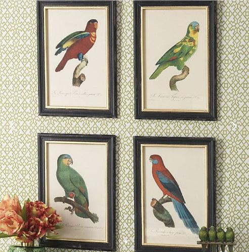 Palm Beach Collection- parrot prints