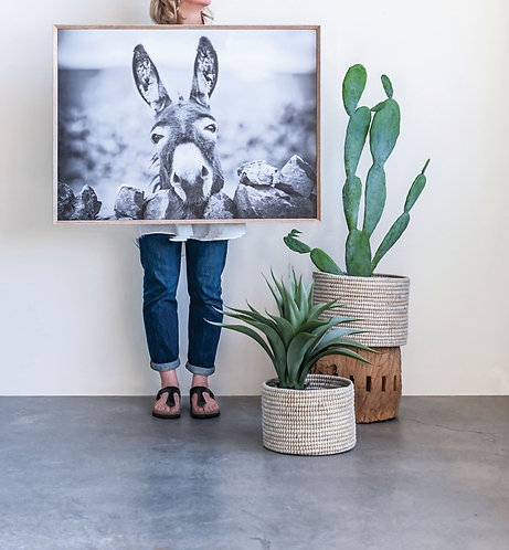 Loxahatchee Collection - framed donkey print