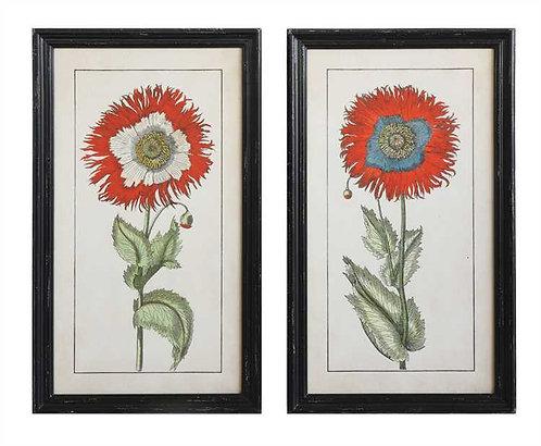 Delray Collection- poppy prints