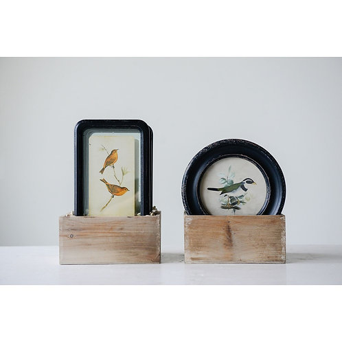 Pinecrest Collection - floating framed bird wall art