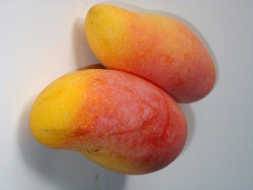 Caribbean Collection- Maha Chanok mango tree