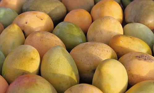 Caribbean Collection- Julie mango tree