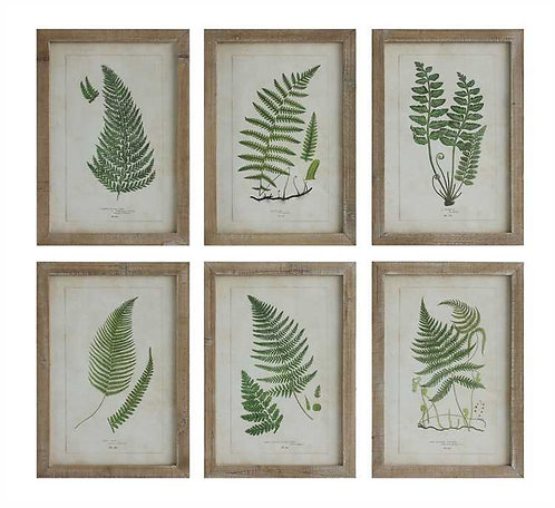 Stoneman Douglas Collection- fantastic ferns