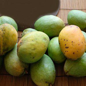 Caribbean Collection- Coconut Cream mango tree