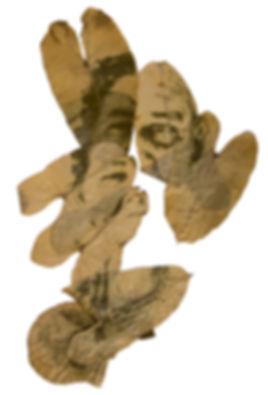 09-fc-perecivel-Jacarecanga II-fitotipia