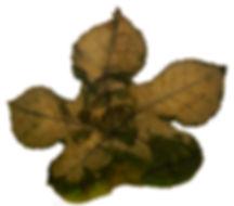 04b-fc-perecivel-Mestre Moa-fitotipia-20