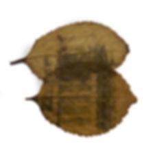 12-fc-perecivel-Jacarecanga-fitotipia-20