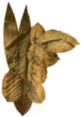 13-fc-perecivel-Jacarecanga-fitotipia-20