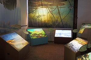 Interaktiv utställning om sötvatten med foto, film, ljud och fysisk interaktivitet. Perfekt att besöka med barn.