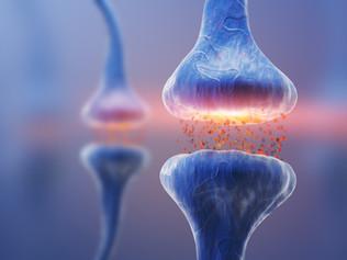Neurotransmitter und fortgeschrittene Trainingsplanung
