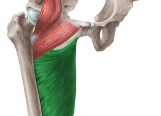Die Bedeutung der Adduktoren in der Kniebeuge