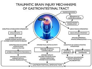Gehirnerschütterung und Dysfunktionen im Darm