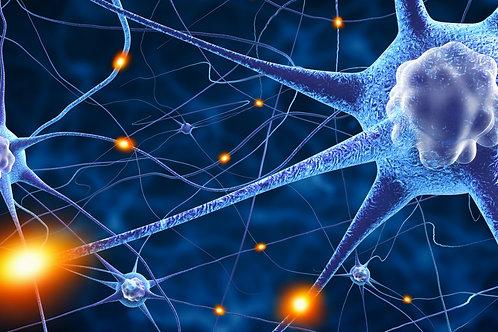 Neuroprofiling - Neurotransmitter und Programmdesign