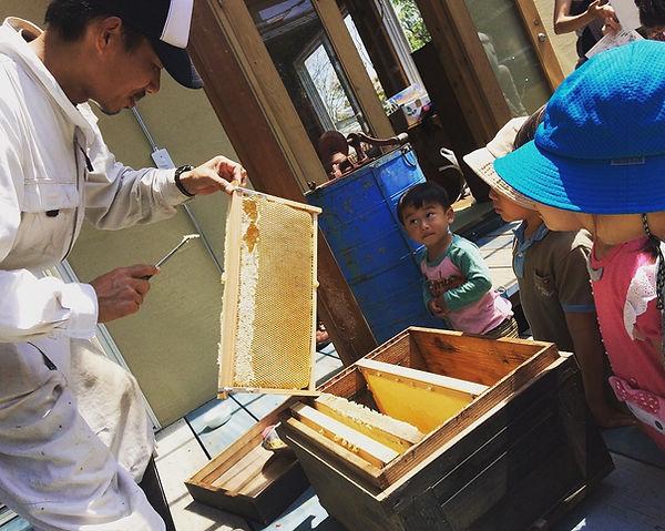 天然蜂蜜 zushihoney はやし養蜂