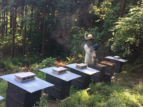 養蜂場 zushihoney はやし養蜂