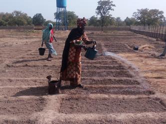 Primeros cultivos en el huerto de Kanso