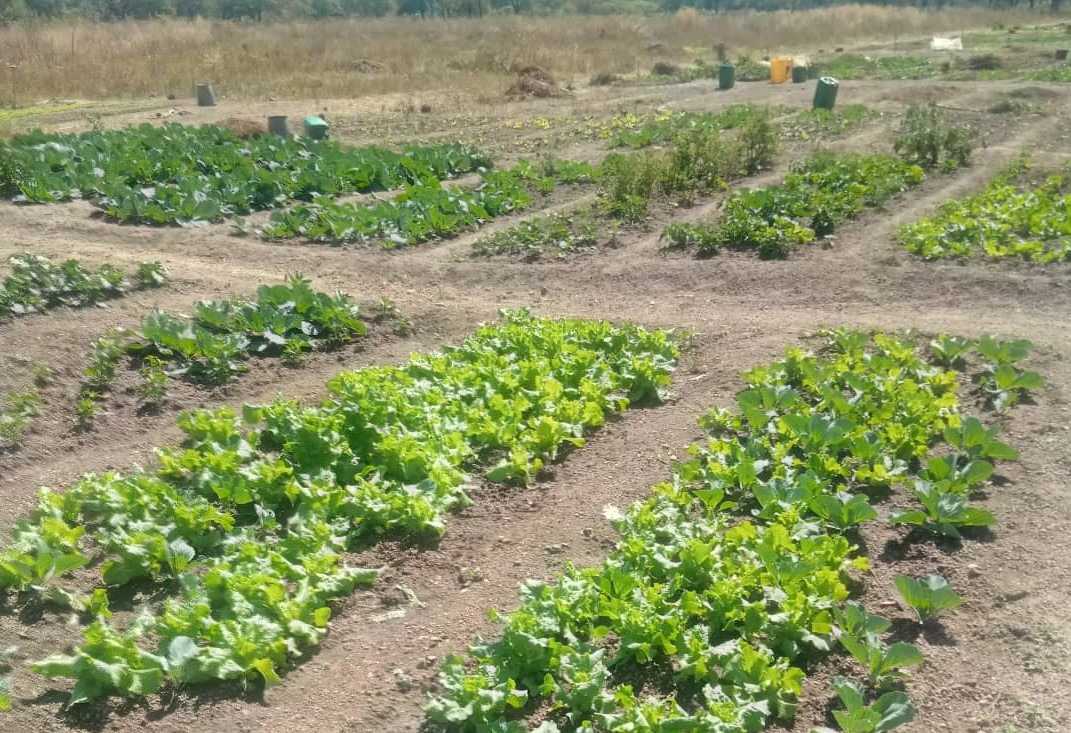 Los cultivos siguen durante la pandemia