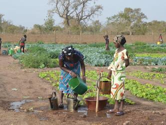 Constituida la cooperativa de mujeres del huerto de Kanso