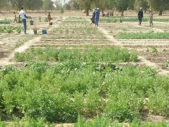 La ONU se interesa por nuestro proyecto para la nutrición