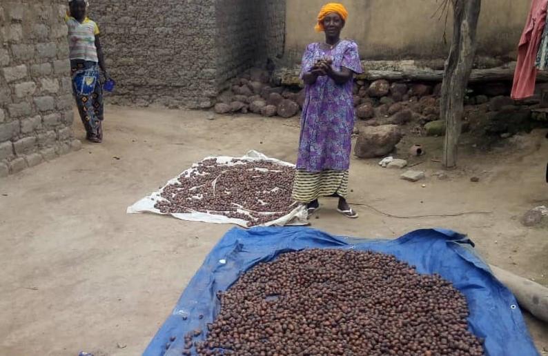 Haz clic para ver más fotos de la recolección de nueces de karité