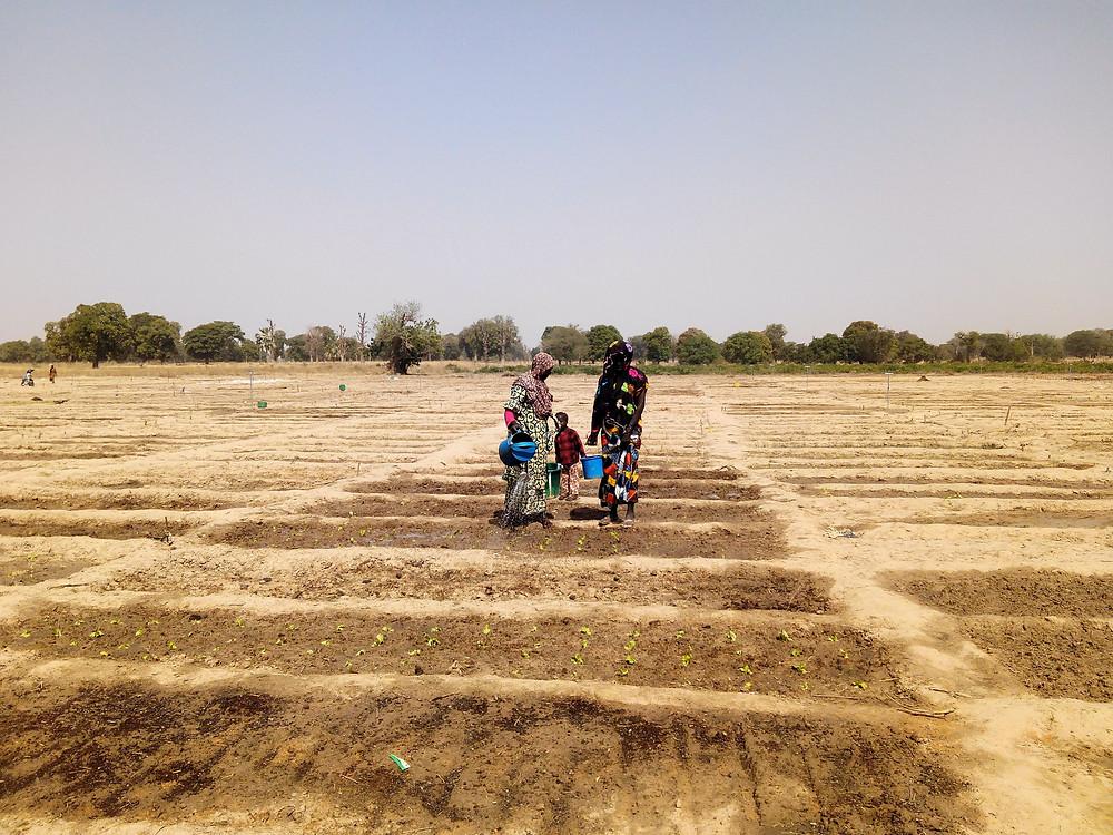 Las mujeres de Boidié han empezado ya a sembrar en el huerto