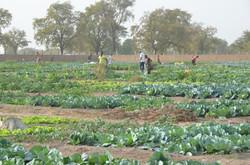 1,2 hectáreas en cultivo