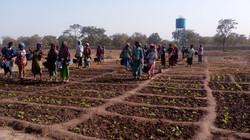 Primeros cultivos