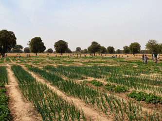 El huerto de Boidié ya abarca 2,5 hectáreas