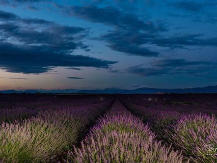 11 juillet 2019--Photo 29535-Canon EOS 5