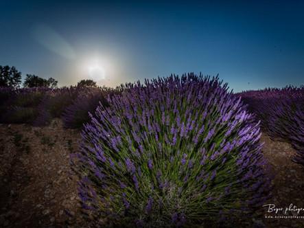 06 juillet 2019--Photo 29433-Canon EOS 5