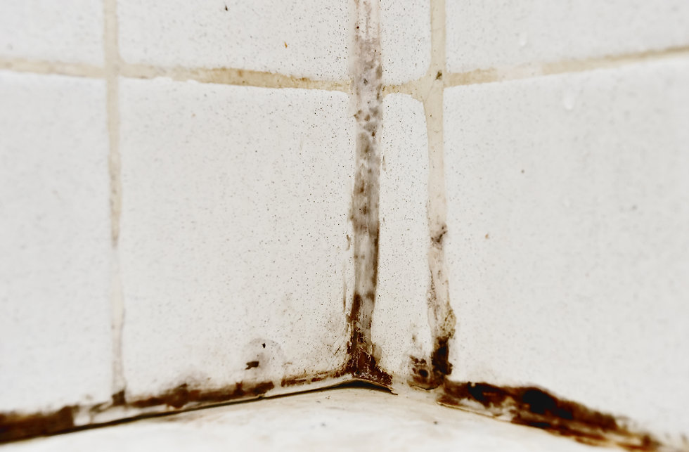 Black mold growing on shower tiles in ba