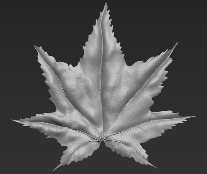 Maple leaf sculpt
