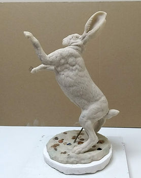 Hare boxing 1