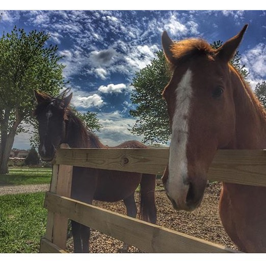 The horses await your arrival at the corral!  Thanks _plainjane1973