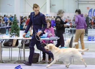 """Международная выставка собак """"Сибирь 21 век"""" г. Новосибирск эксперты: Urek Tatjana (Словен"""
