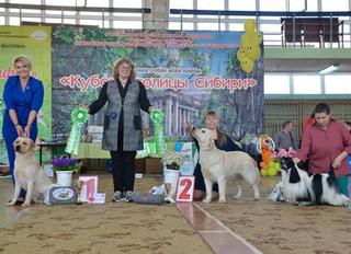 Ну а теперь подробнее о потрясающих прошедших выходных в Новосибирске!!! 13.04.2019 Выставка собак &