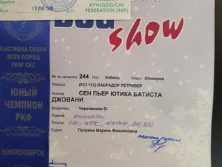"""19.02.2019 г. Новосибирск, Всероссийская выставка """"DOG CHOW-2019"""", эксперт Патрина Марина"""