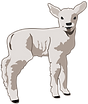 molumen-young-lamb-2.png