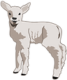 molumen-young-lamb-1.png