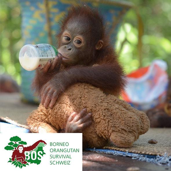 BOS Borneo OrangUtan Survival Tagesration Milch spenden