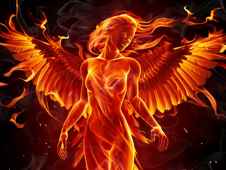 Searching For The Phoenix