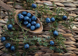 359-gin-ilbotanico-gallery-01