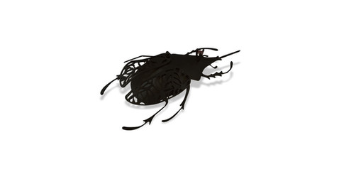 Dark Rhino Beetle