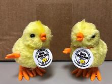 Custom Promotional Chickens Sal's Birdland