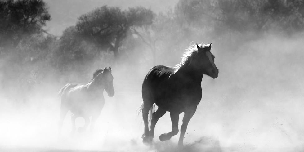 Krachtcirkel Paard